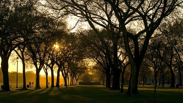 アメリカ ワシントンDC 国会議事堂前 公園